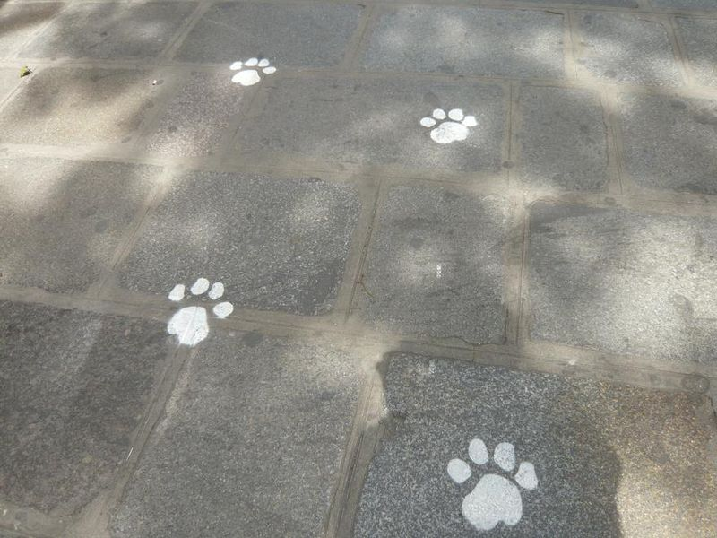 Pattes du LION de Denfert_Place Denfert-Rochereau 2009_mfd