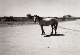 BLANC Patti Smith_ HORSE