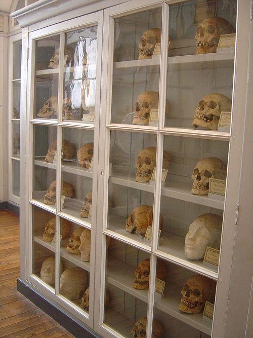 Rochefort Musée de la médecine navale ARMOIRE AUX CRÂNES 2006