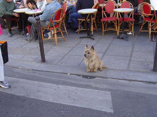 1 ORSON _Café CONTI 08 04 2007