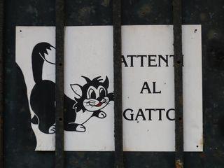 Gatto..._mfd, 2009