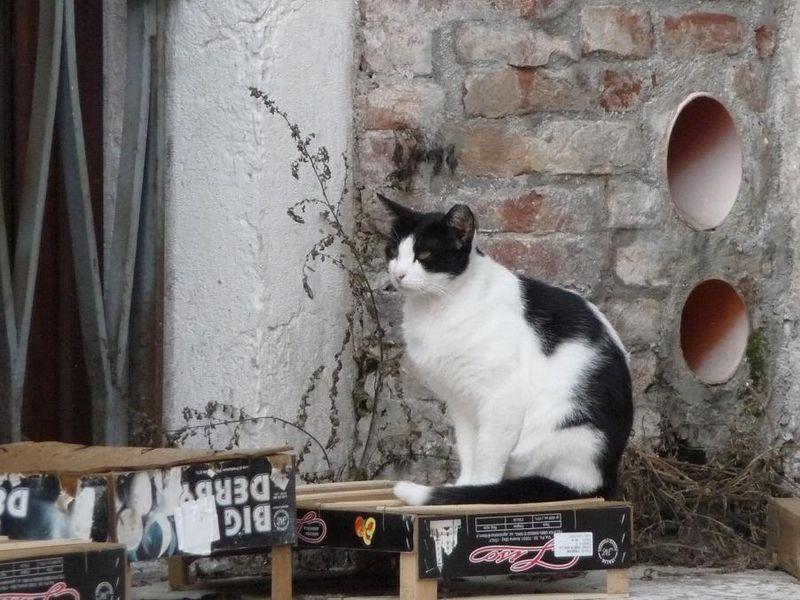 Gatto di S. Lorenzo, 2009_GD