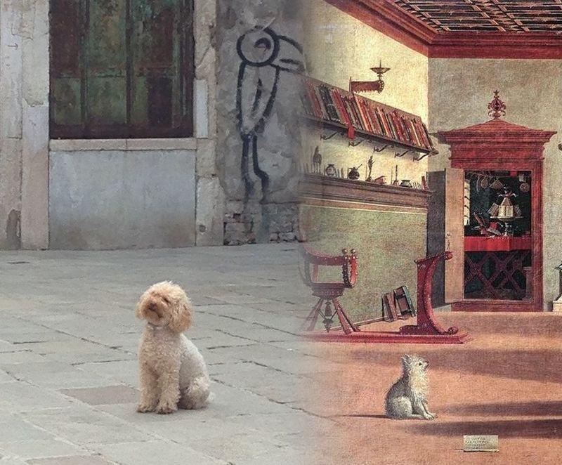 CHIENS de Venise. 1502-2015
