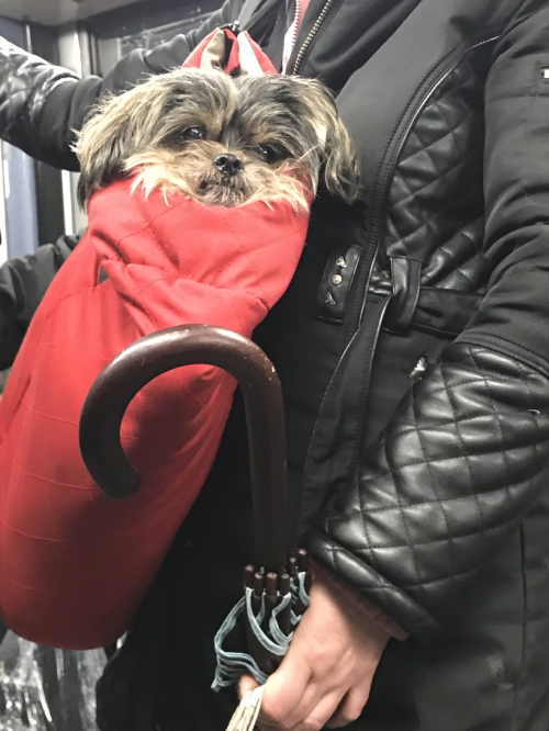 2018 01 PARIS  métro