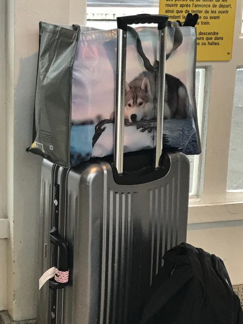 Chien de traîneau ARGENTAN-Gare 02 2018
