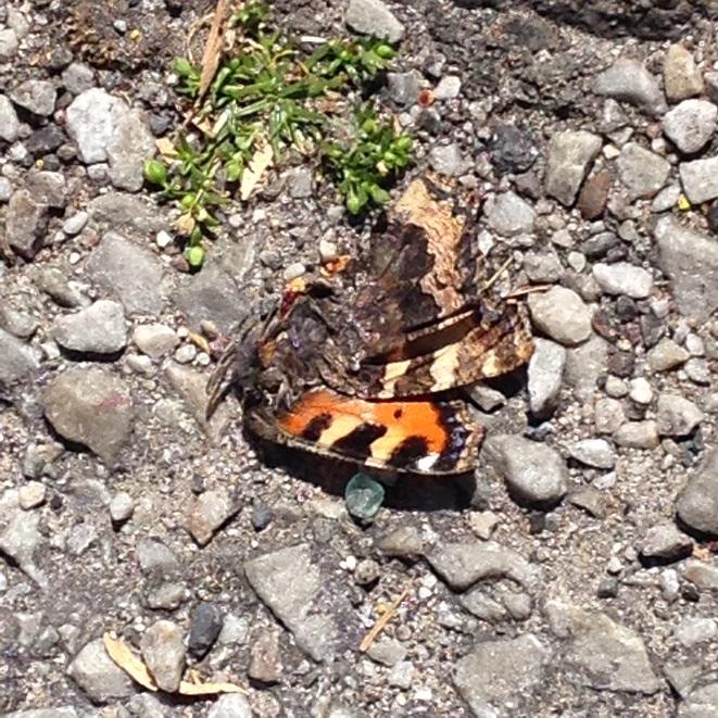 NATURE MORTE 08 06 2015