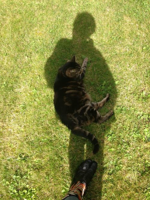 Mfd Au pied du chat au jardin 2014