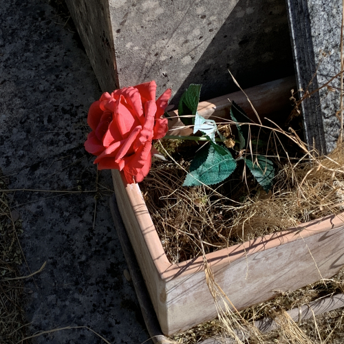 Rouge cimetière Montparnasse